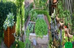 Curso online e gratuito sobre Horta Caseira